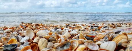Strand vol schelpen