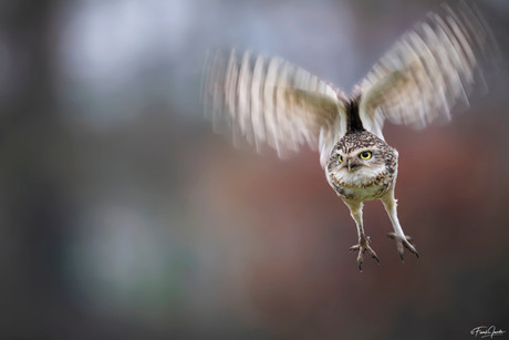 Owlicopter