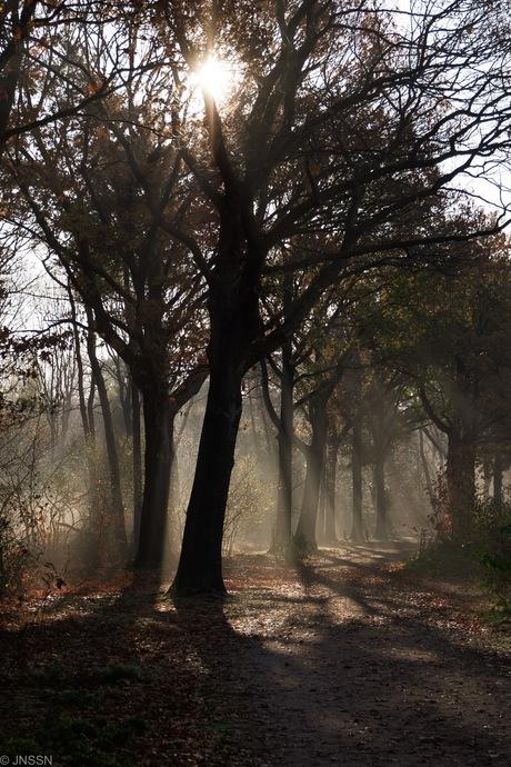 Herfstochtend in de mist