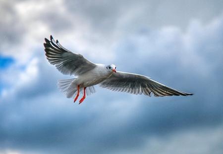 5E8F411F-853F-466F-A357-42CEC11CF967 - - - foto door sadeghifarshid11 op 06-03-2021 - deze foto bevat: vogel