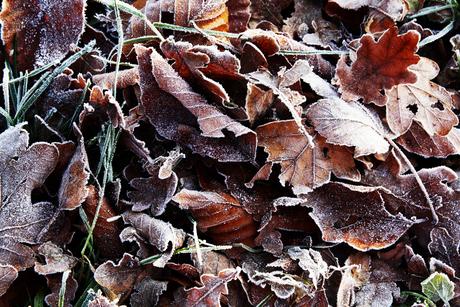 Autumn vs winter