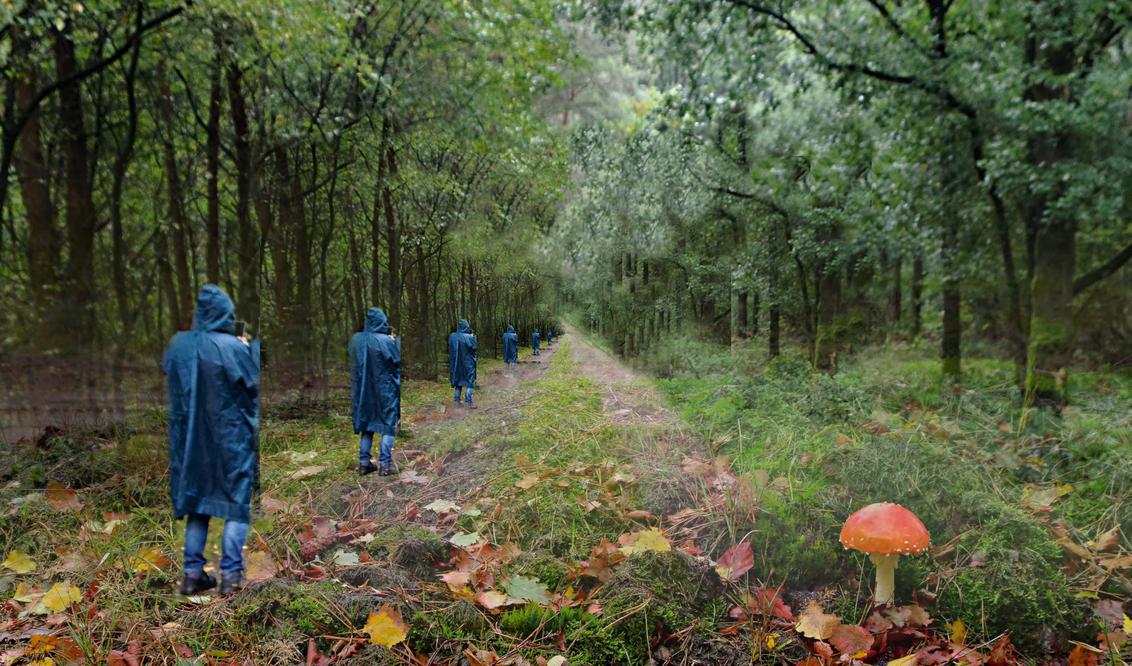verdwenen in de herfst - - - foto door johntomeij op 12-11-2020 - deze foto bevat: bewerking, paint shop pro