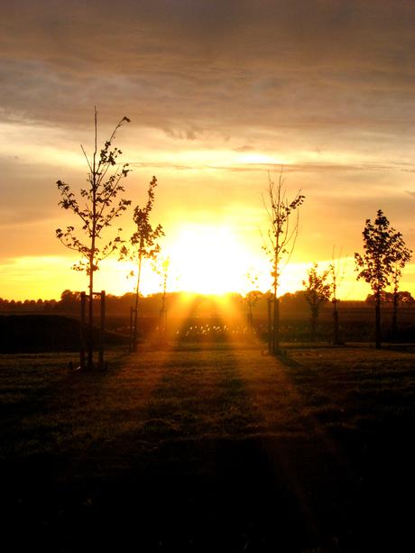 Dag zon