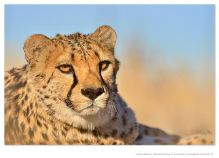 Close - Deze foto is gemaakt tijdens de fotoreis naar Namibië. Ik organiseer die jaarlijks, en het verveeld nooit;-). Dieren zullen nooit als een model zijn, - foto door LoulouBeavers op 28-12-2016 - deze foto bevat: natuur, dieren, safari, olifant, afrika, fotoreis, fotoreis namibie