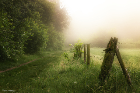 Magical mist