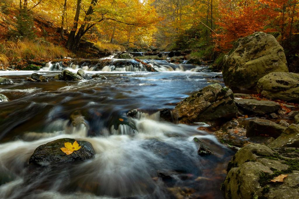 Herfst - Heerlijke herfstkleuren in Belgie - foto door avdmeulen op 12-11-2019 - deze foto bevat: zon, water, natuur, herfst, landschap, bos, bomen, rivier, lange sluitertijd