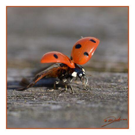 fitness for ladybugs | squat