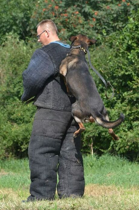 hondensport