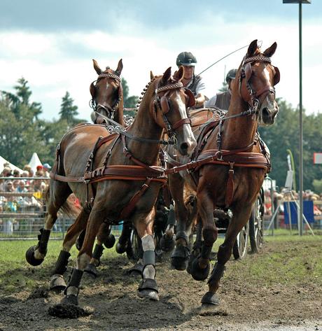 menwedsrtijd de vierspan paarden