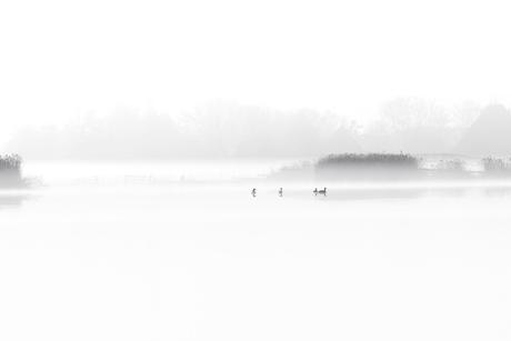 mist in het westzijderveld