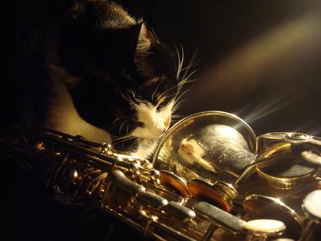 Muziekkat