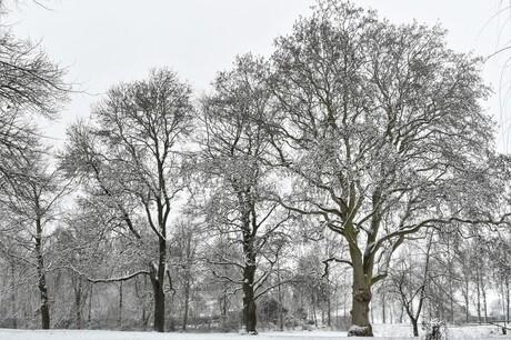 De winter was kort maar krachtig......