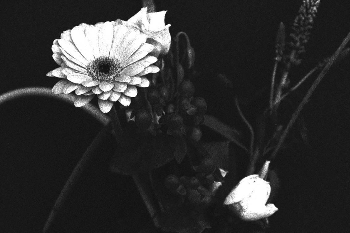 flowers - bosje zwart wit - foto door crazydiamond op 17-02-2020 - deze foto bevat: bloem, bewerkt, fantasie, bewerking, zwartwit, contrast, textuur