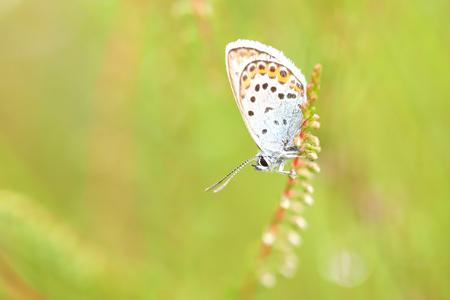 Heideblauwtje - Heideblauwtje - foto door ErikV74 op 13-07-2020 - deze foto bevat: macro, natuur, vlinder, wildlife