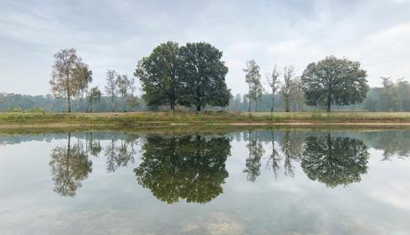 Boswachterij Dorst, spiegeling II