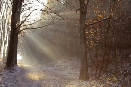 De mooie winterse taferelen