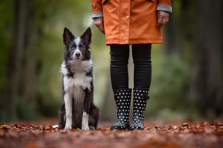 Hondenweer