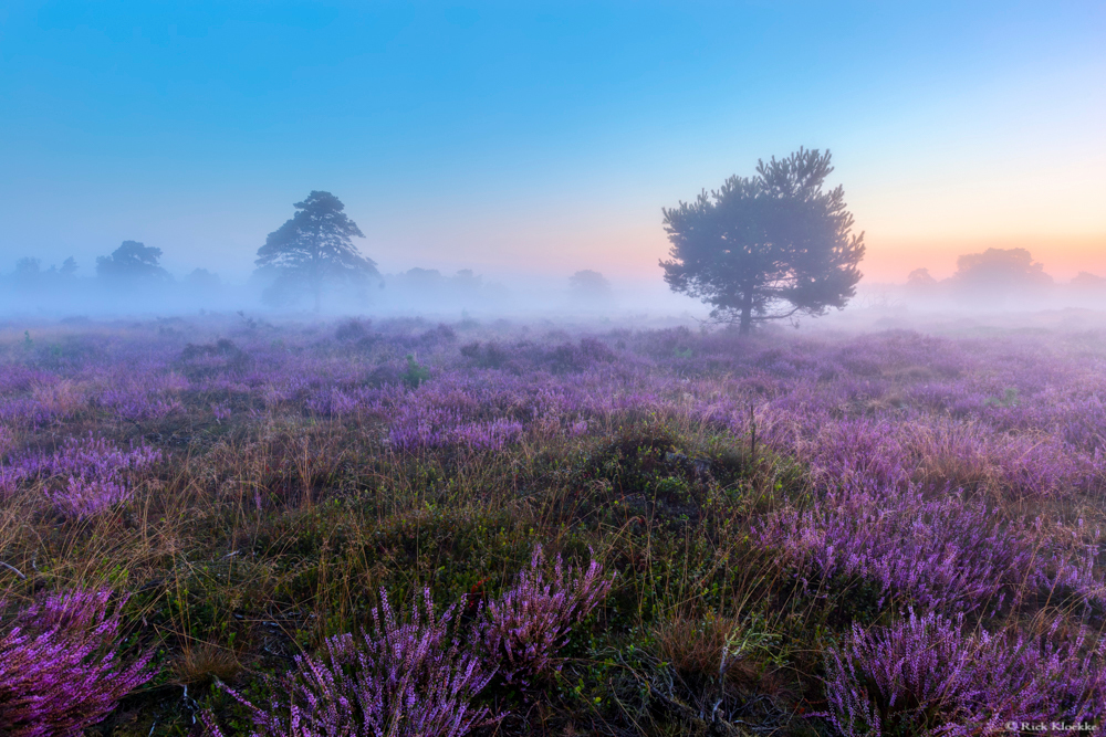 "Serene morning - ""Serene morning""