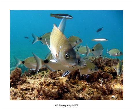 Onderwaterwereld 1
