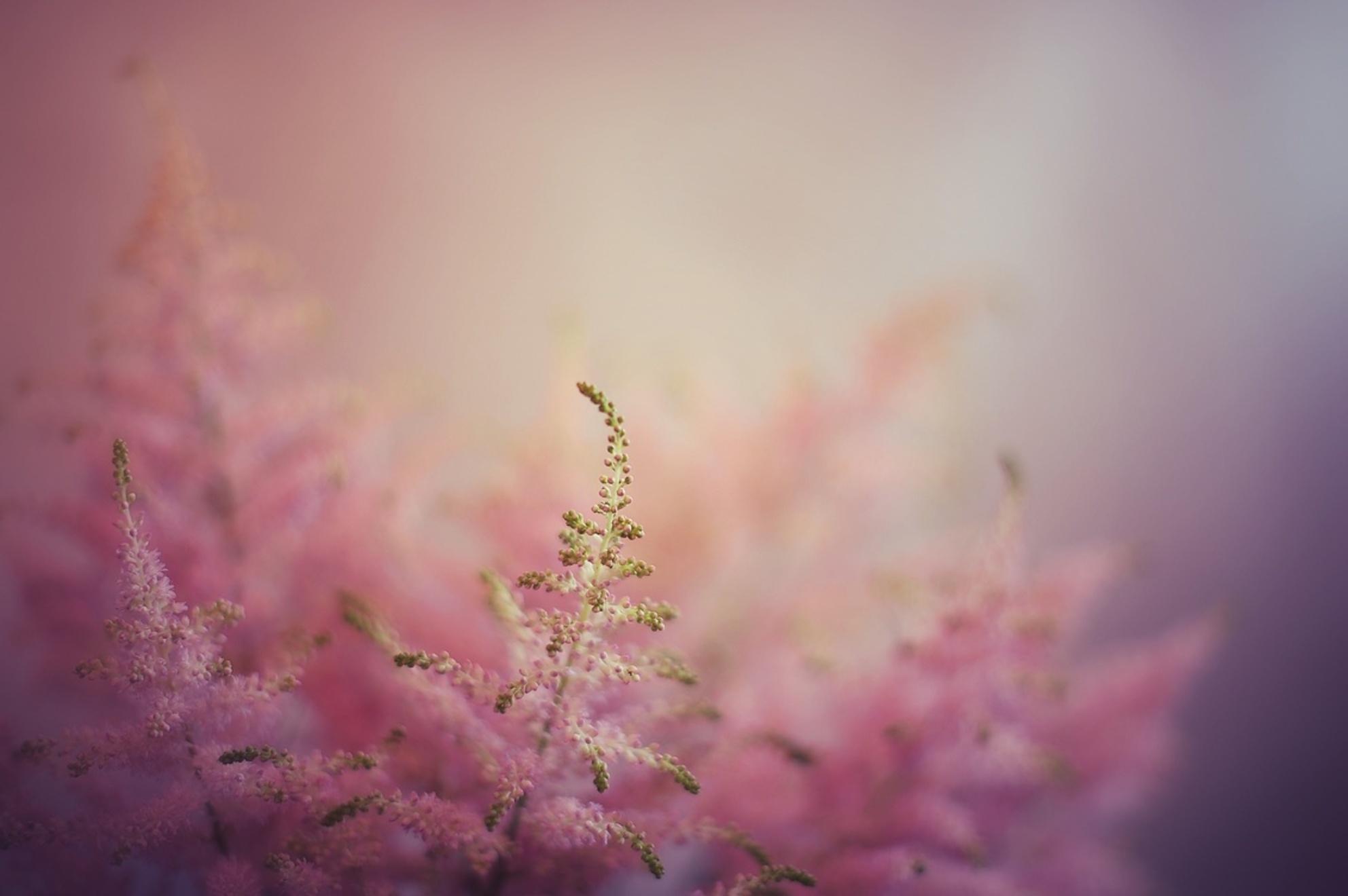 Pretty in Pink - - - foto door Stilting op 06-01-2016 - deze foto bevat: roze, paars, macro, blauw, bloem, natuur, tuin, dof, bokeh - Deze foto mag gebruikt worden in een Zoom.nl publicatie