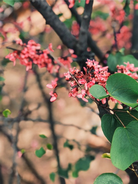 C2862AF4-C4E1-4350-9B48-274BDD2392BF - Natuur foto - foto door Esmeikleij op 22-12-2018 - deze foto bevat: groen, boom, bloem, lente, natuur, zomer, voorjaar