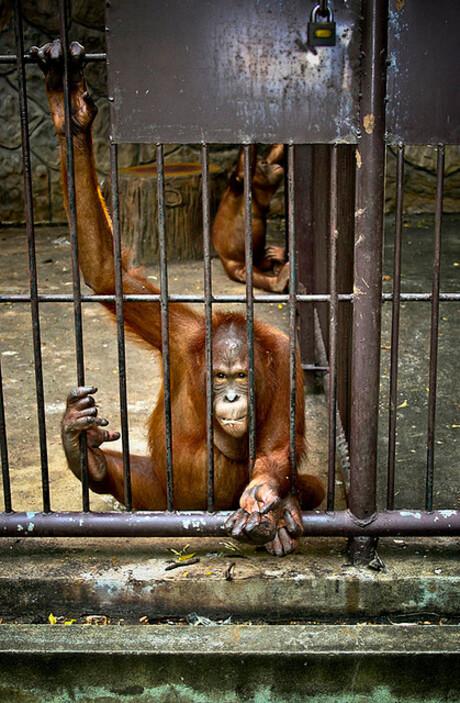 Monkey Begs