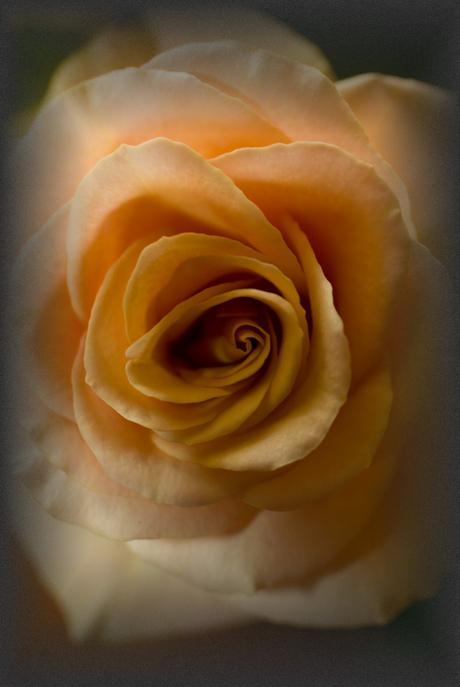 geef je een roosje