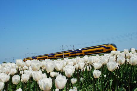 Bollenveld en trein
