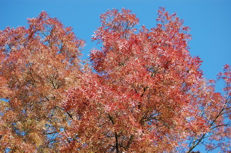 gekleurde bladeren, blauwe lucht