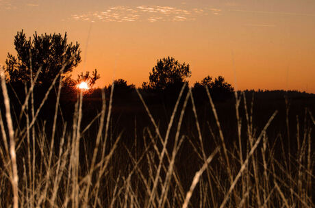 een vries koude avondzon op de hei
