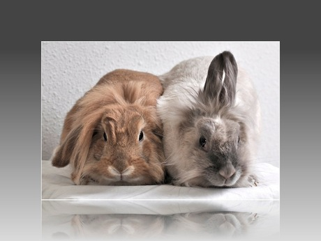 konijnenshoot