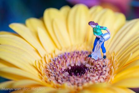 water geven - Toch maar even de bloemen wat water geven..... - foto door manja_zoom op 11-05-2020 - deze foto bevat: miniatuur, gerbera, water, tuinieren, preiser, H0, minimensjes, tiny people, minifigures