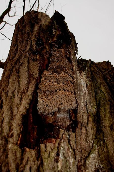 Wespen nest