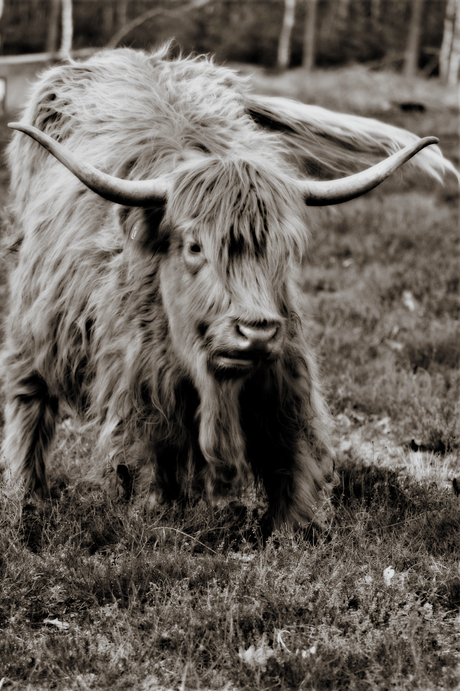 highlander in oldtimer