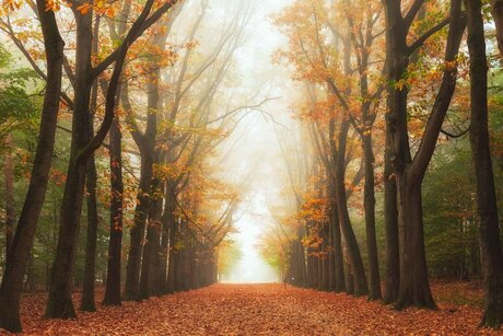 The misty tree path