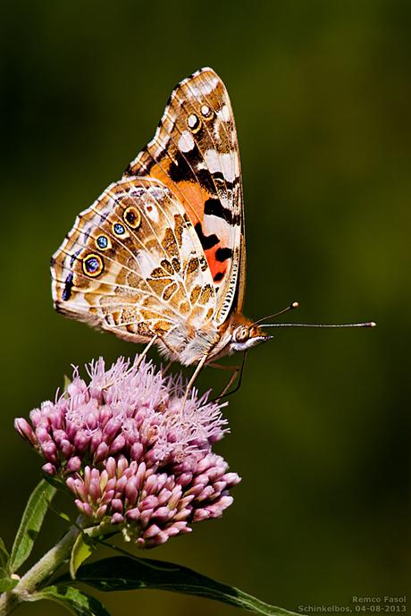 Vlinder (600)