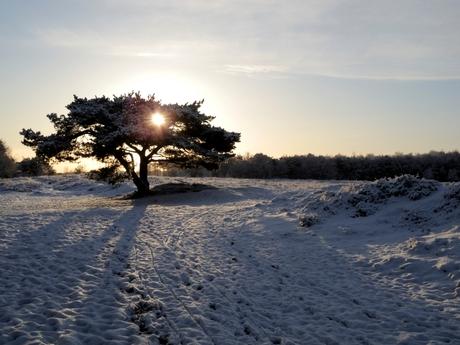 Winterlicht Regte heide