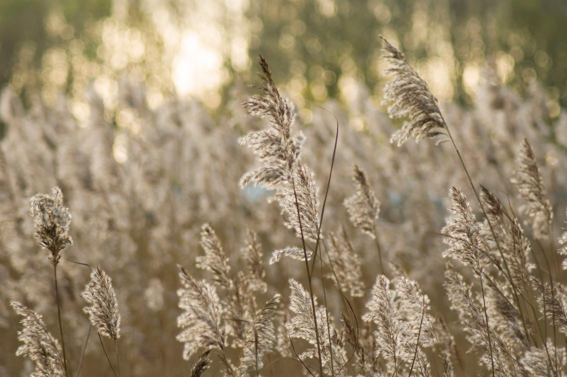 Riet - - - foto door Noogle op 21-11-2015 - deze foto bevat: wolken, zon, water, natuur, licht, bomen, riet, meer, bokeh
