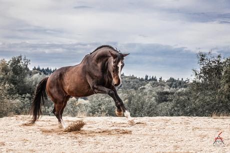 1 Brake Horse Power