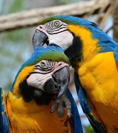 Blauwgele ara - DSC_0572kopie - foto door ilexphoto op 30-04-2016 - deze foto bevat: papegaai, dierentuin, ara