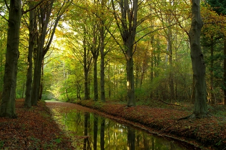 Herfst in In Zuid-Hollands Landschap