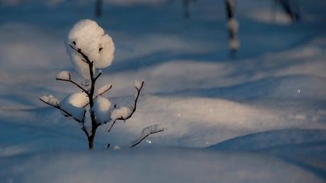 De Verschrikkelijke sneeuwman