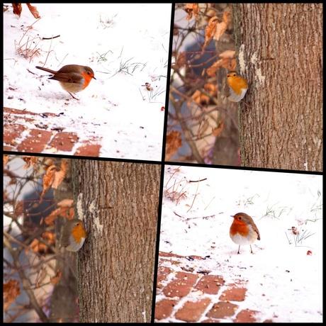 collage.jpg roodborstje in de boom