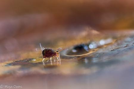 Just watching... - Vorig jaar al eens een poging gedaan. Nu weer met een blad met springertjes in de weer geweest. Nog best lastig.  Tips en tricks? Graag! - foto door mb83 op 15-11-2018 - deze foto bevat: macro, natuur, bruin, herfst, insect, dof, springstaartje