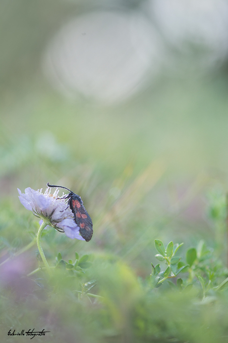 Wakker worden op een kleurrijk veld