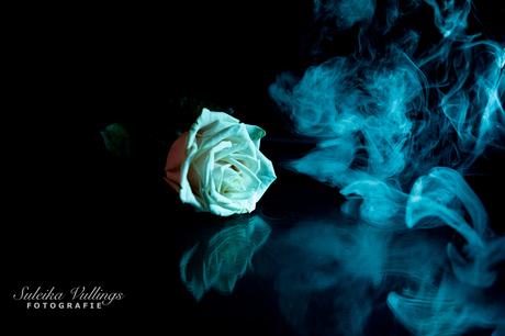 Colourfull flowers - 07 februari 2021 -00003
