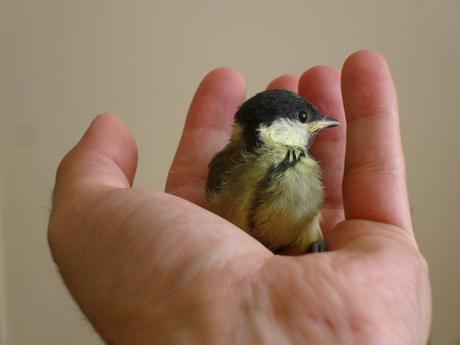vogelje