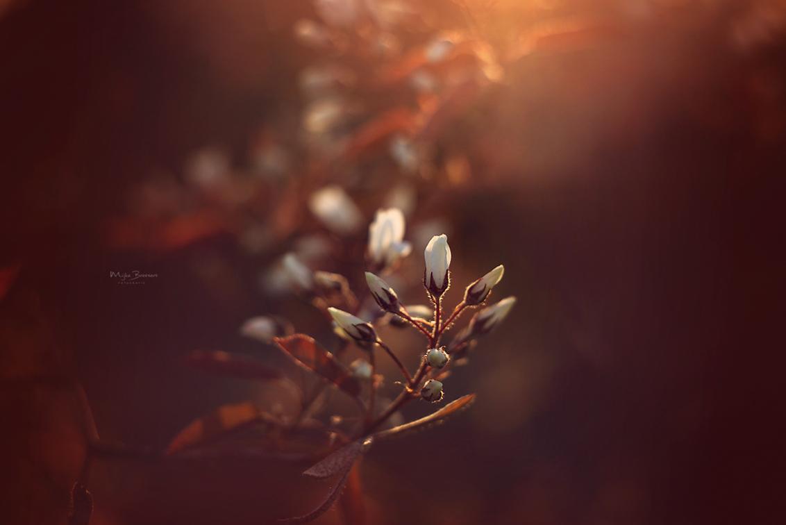 Avondzon - - - foto door MijkeBressers op 03-04-2020 - deze foto bevat: zon, boom, bloem, lente, natuur, avondzon, zonsondergang, tegenlicht, voorjaar, zonlicht, nederland, warm, warmte, helios, goldenhour, goudenuur, vintagelens