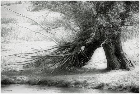 de boom 8123 - - - foto door onne1954 op 23-07-2018 - deze foto bevat: boom, natuur, licht, landschap, zomer, nederland, biesbosch