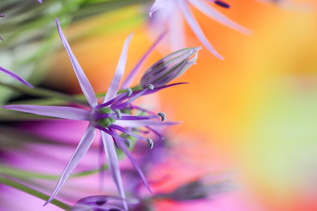 Colors makes me happy - - - foto door jschaapman op 22-03-2020